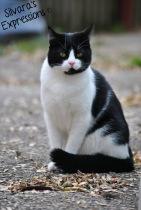 Kitty 001