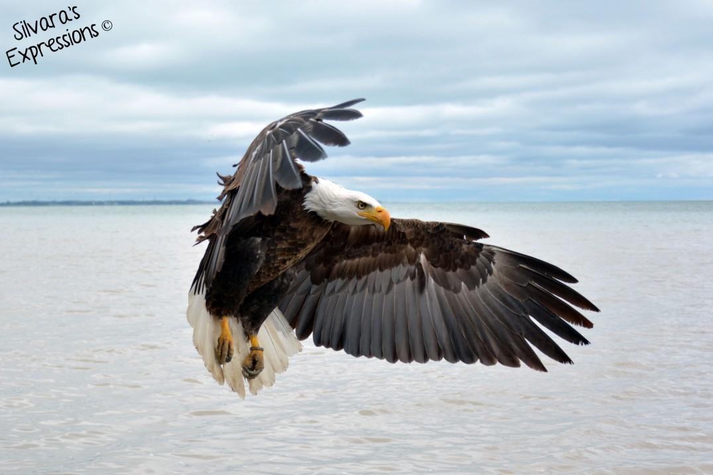 2016-05-14 - Eagle 002