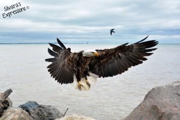 2016-05-14 - Eagle 004