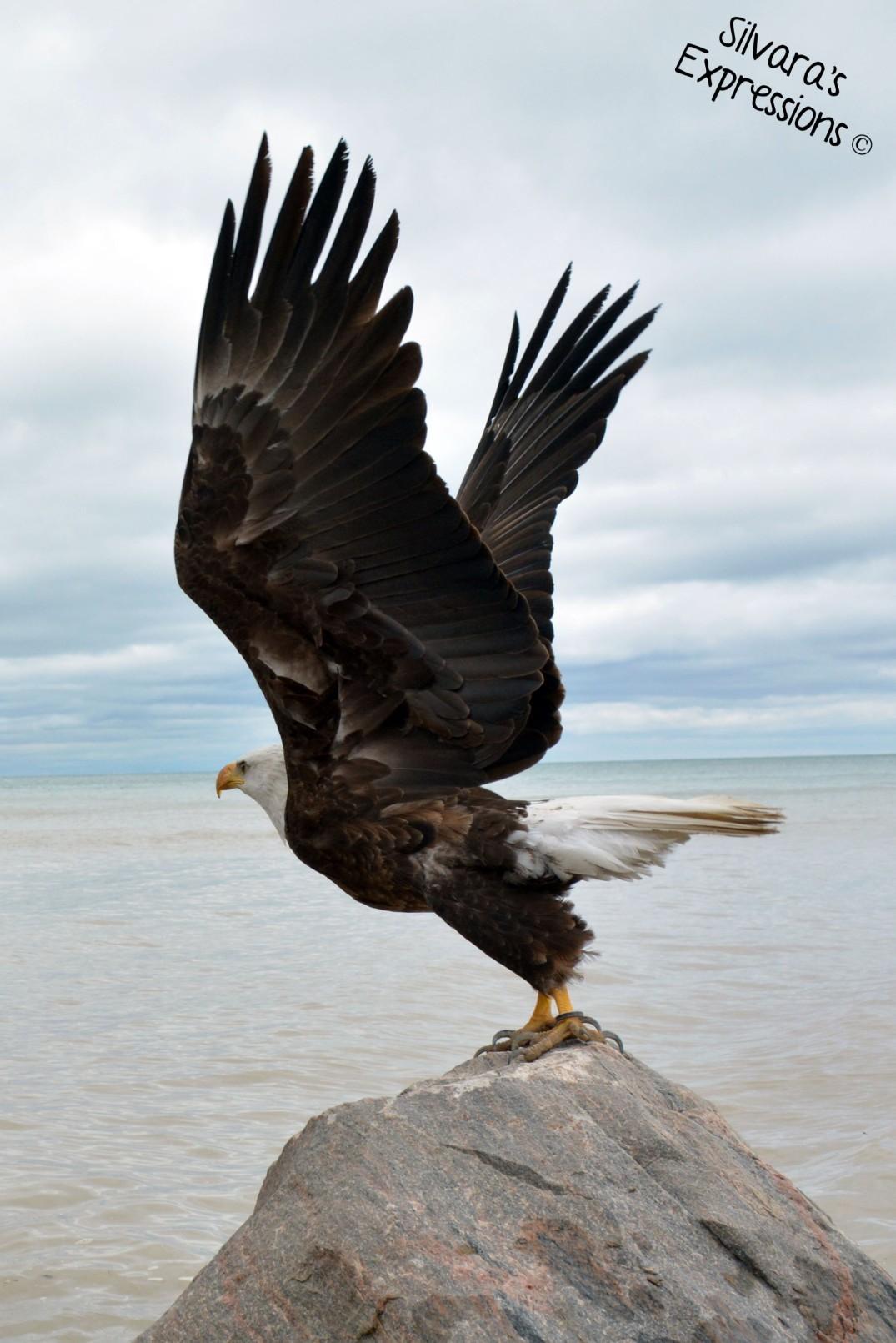 2016-05-14 - Eagle 005