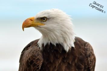 2016-05-14 - Eagle 006