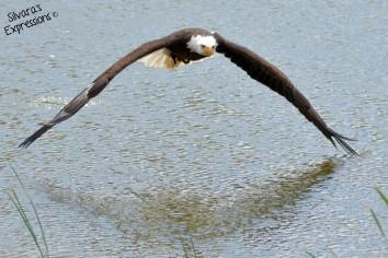 2016-05-14 - Eagle 007