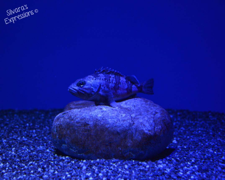 Aquarium 001