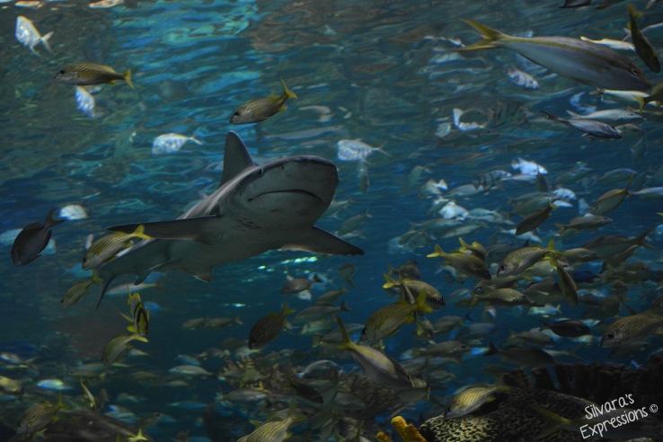 Aquarium 002