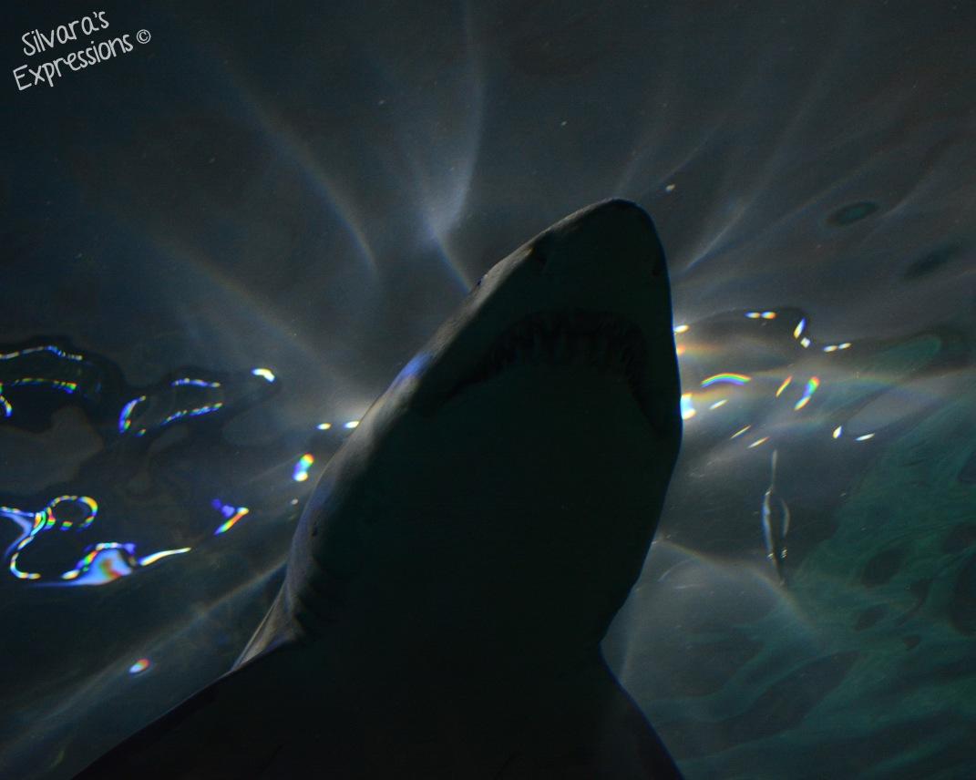 Aquarium 003