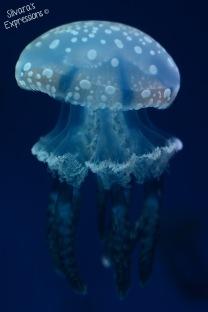 Aquarium 004