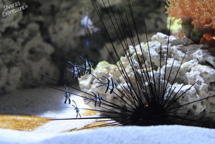 Stanley Park Aquarium 001