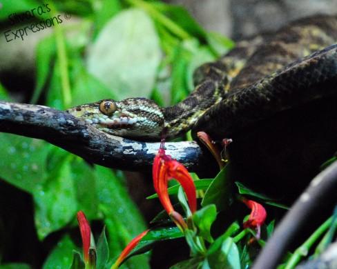 Stanley Park Reptiles 001