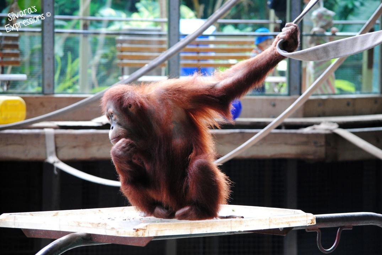 Toronto Zoo 006