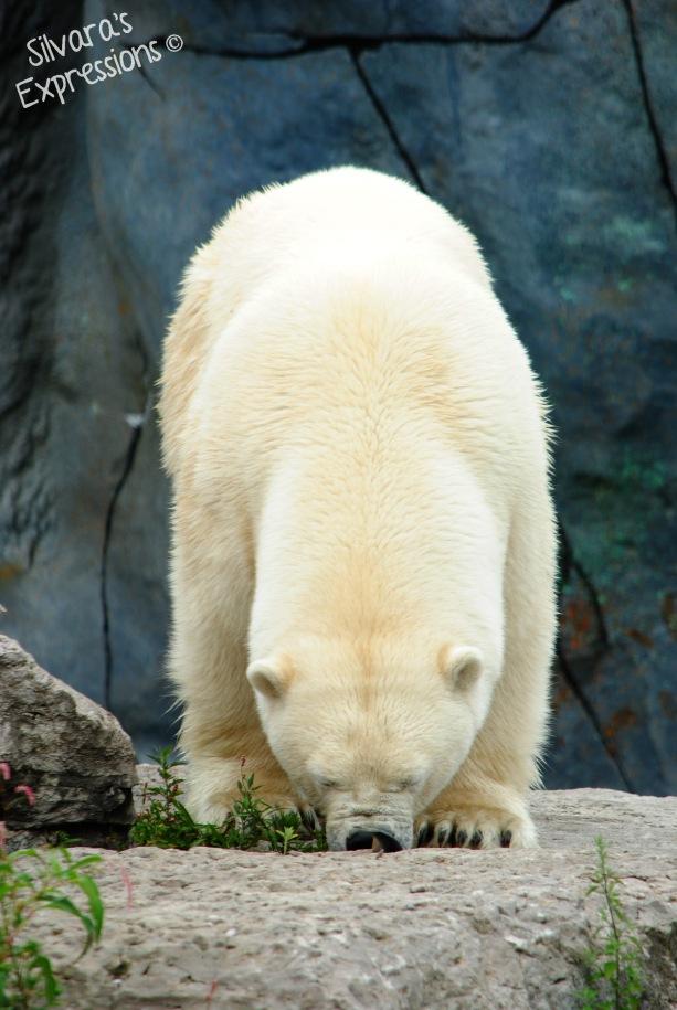 Toronto Zoo 125