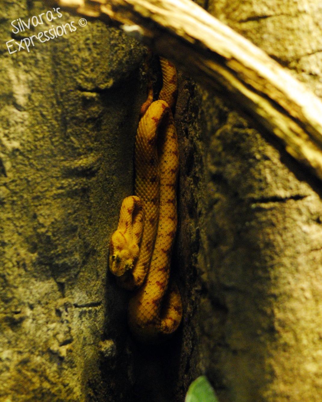 Toronto Zoo Reptile 001