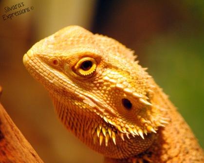 Toronto Zoo Reptile 004