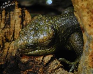 Toronto Zoo Reptile 005