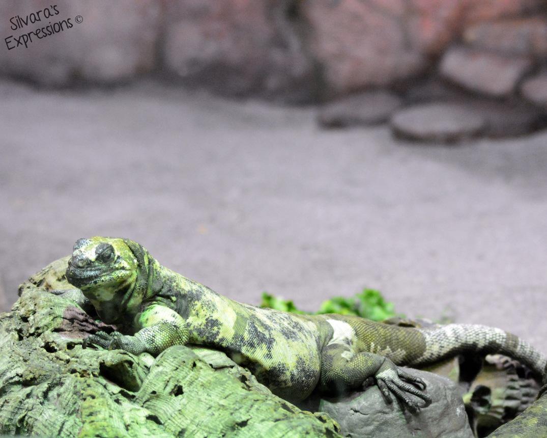 Toronto Zoo Reptile 007