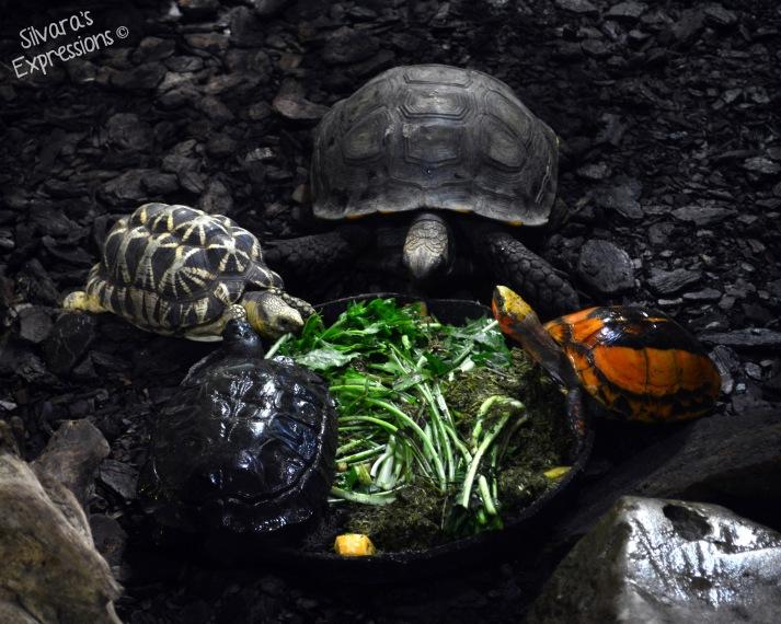 Toronto Zoo Reptile 008