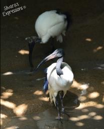 Toronto Zoo Bird 001