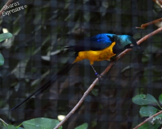 Toronto Zoo Bird 003