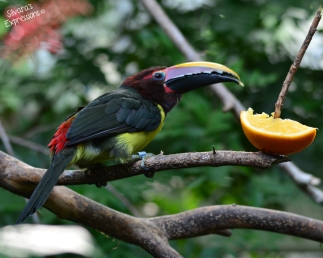 Toronto Zoo Bird 006