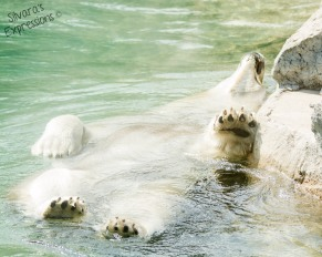 Toronto Zoo 116