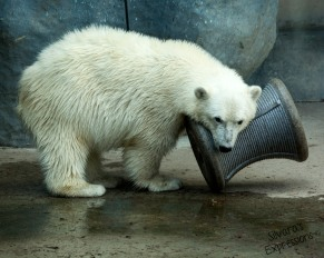 Toronto Zoo 149