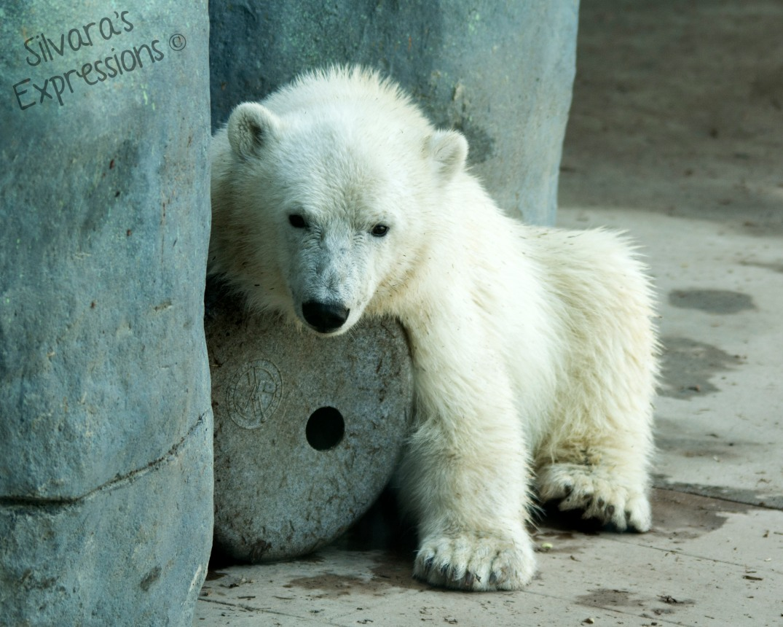 Toronto Zoo 156