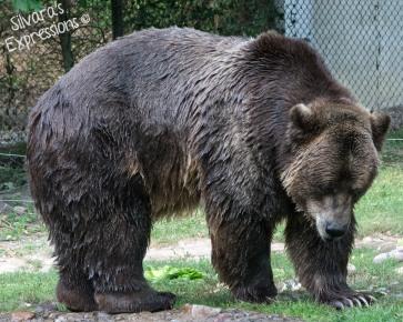 Toronto Zoo 361
